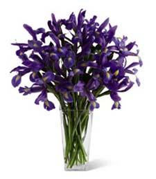 Richly Iris