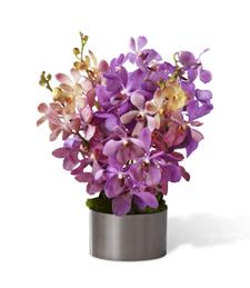 Orchids of Mystique