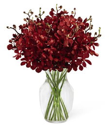 Ravishing Orchids Sympathy Arrangement
