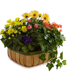 Overflowing Abundance Plant Basket