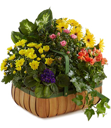 Garden of Gifts Sympathy Basket