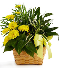 Dishgarden of Sympathy Basket