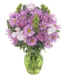 Delicate Lavender