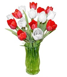 15 Red & White Tulips