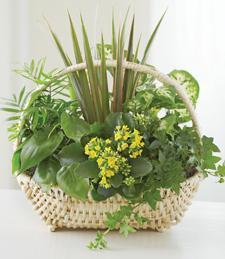 Sweet Aromas Garden Basket
