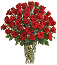 4-Dozen Thinking of You Roses