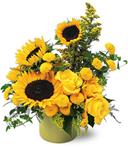 Sunflowers of Heaven
