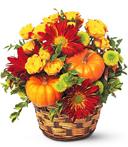 Array of Pumpkins