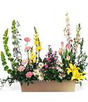 Spring Flowers Windowbox