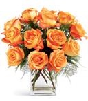 Blazing Rose Beauty