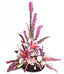 Aromatic Flowers