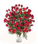 5-Dozen Roses--WOW!