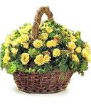 Daydream Business Basket