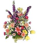 Celebration of Flower Colors