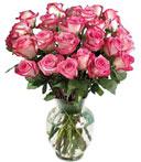 Two-Dozen Fire & Ice Roses