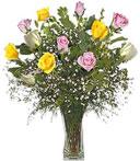 Spring Time Roses