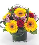Bundles of Sunflowers